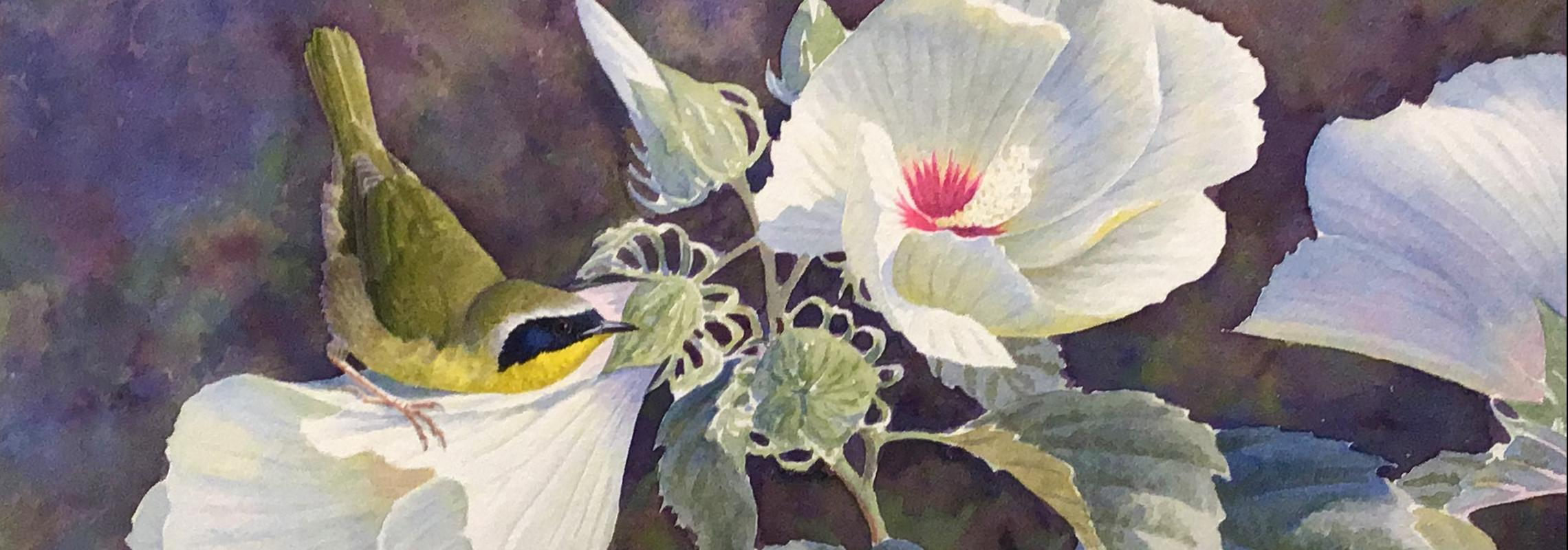 Common Yellowthroat by David Plank